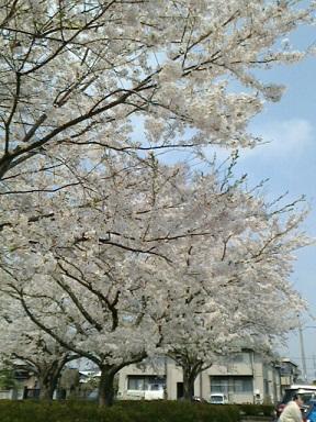 20140410 上高場公園2.jpg